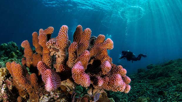 """Corals"" by Christian Gloor licensed under CC BY 2.0"