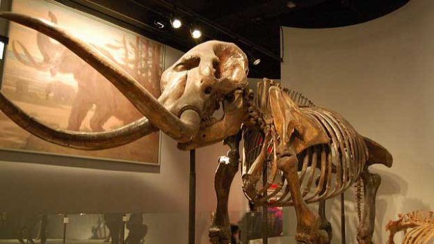 """mastodon"" by John DiSalvo licensed under CC BY 2.0"
