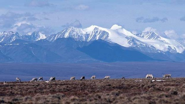 """Caribou and Brooks Range, Arctic NWR"" by U.S. Fish and Wildlife Service Headquarters licensed under CC BY 2.0"