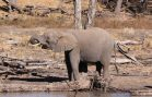 Ban on Importing Ivory from Africa is Reversed in the U.S.