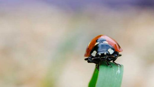 """Lady Bird"" by Simon Powell licensed under CC BY 2.0"