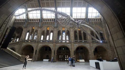 A blue whale skeleton goes on display in Hintze Hall at the Natural History Museum in London, replacing Dippy the Diplodocus which will be going on a nationwide tour of museums and galleries. PRESS ASSOCIATION Photo. Picture date: Thursday July 13, 2017.  Photo credit: Steve Parsons/PA Wire