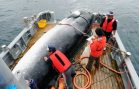 Japan to Resume Commercial Whaling, But Not In Antarctic