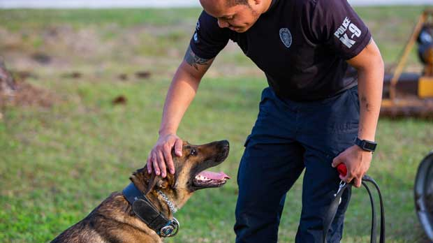 In this Feb. 21, 2019 photo made available by Fresh Take Florida, Gainesville Police Department Officer Edward Ratliff pets his K-9 Ace after a successful training session in Gainesville, Fla. A Florida bill would increase the penalty for intentionally hurting or killing police, fire or search-and-rescue dogs and horses. (Cat Gloria/ Fresh Take Florida via AP)