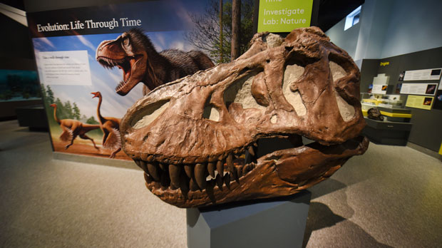 A tyrannosaur skull is seen at the entrance to the 'Evolution: Life through Time ' exhibit at the University of Michigan's Natural History Museum on Thursday, April, 11, 2019 in Ann Arbor. The University of Michigan Museum of Natural History is reopening to the public in its new building. The Ann Arbor school says new exhibits will be on display to the public starting Sunday at the museum, which combines natural history with scientific research. The museum closed in December 2017. (Max Ortiz/Detroit News via AP)