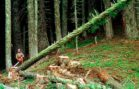 Timber Companies, Environmentalists Sign 'Historic' Pact