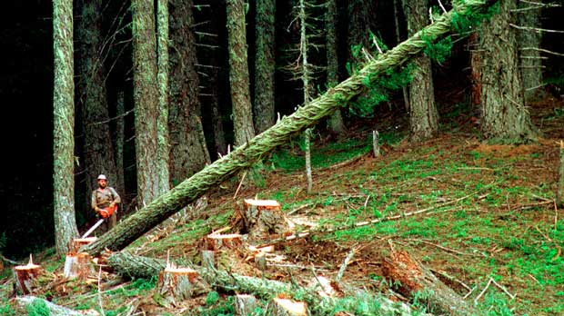 Environmentalists Loggers Agreement