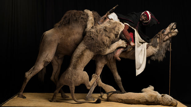 """Lion Attacking a Dromedary"""