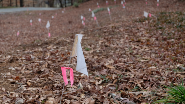 pink flags and spray-painted white circles