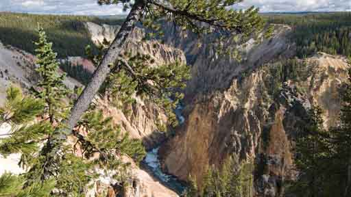 A pine tree partially traverses the scene from near Grand View overlook on the north side of the Grand Canyon of the Yellowstone, photographed on October 23, 2013. A large chunk of the stone tower on the right side of Jackson's has fractured off, exposing lighter, less weathered stone underneath.  (Bradly J. Boner/Jackson Hole News & Guide via AP) MANDATORY CREDIT