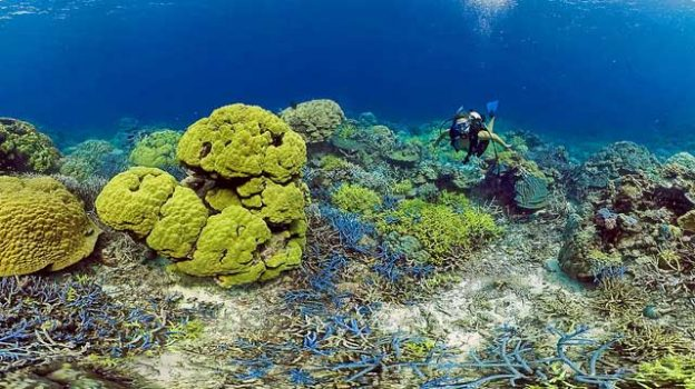 """""""bokissa_coral_reef_5"""" by Roderick Eime licensed under CC BY 2.0"""