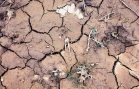 Warming Soil Temperatures Contributing to Carbon Emissions