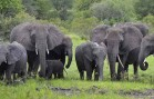 Comprehensive Elephant Census May Be A Game Changer for Saving the Species