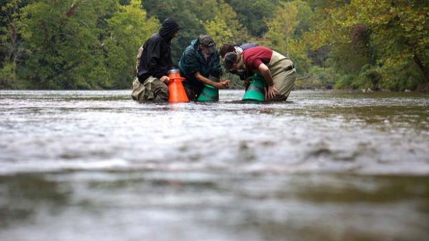 """Montreat College students look at a mussel"" by U.S. Fish and Wildlife Service licensed under CC BY 2.0"