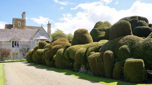 """The Elephant Hedge"" by David Merrett licensed under CC BY 2.0"