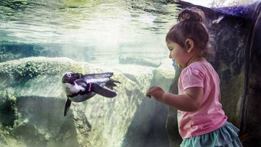 """Kid with Penguin at Lincoln Park Zoo"" Photo courtesy of Lincoln Park Zoo"