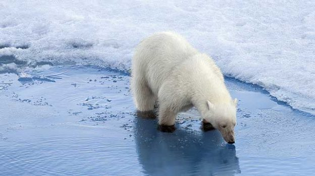 """""""Polar Bears on Thin Ice"""" by Christopher Michel licensed under CC BY 2.0"""
