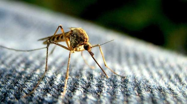 """""""Mosquito"""" by Tom licensed under CC BY 2.0"""