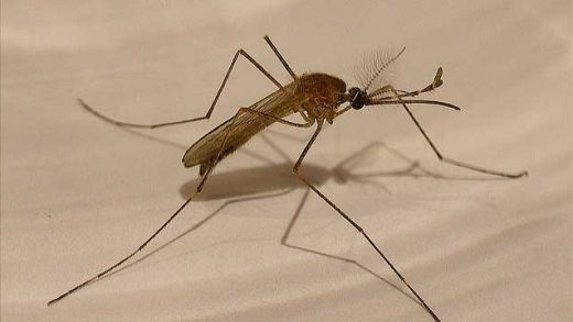 """""""Mosquito"""" by Enrique Dans licensed under CC BY 2.0"""