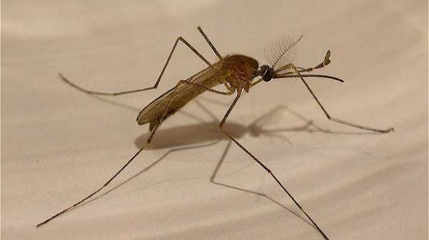"""Mosquito"" by Enrique Dans licensed under CC BY 2.0"